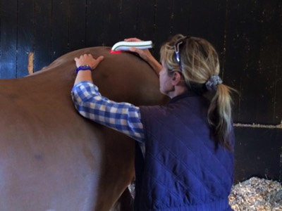 Red Light Therapy for Equine Use